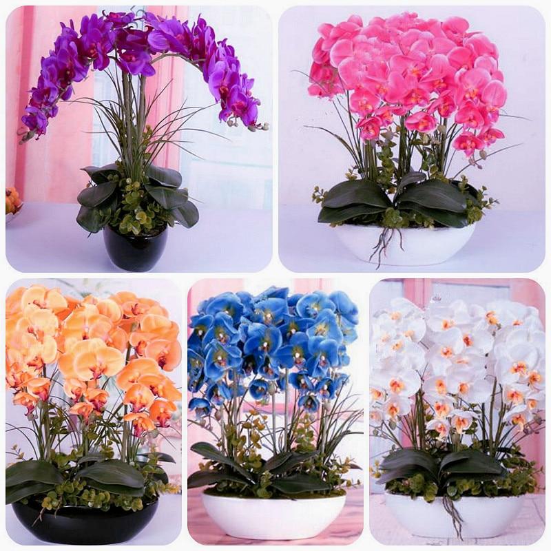 эухарис цветы комнатные бесплатная доставка