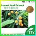 Organic Corosolic acid from Loquat Leaf Extract/Corosolic acid powder with good price 500g/lot