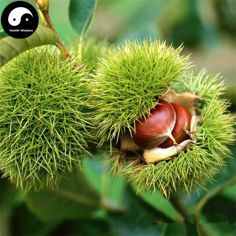 Compare Prices on Chestnut Tree Fruit Online ShoppingBuy Low