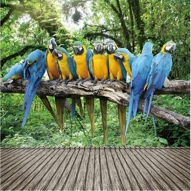 Custom Photo Wall Mural Wallpaper 3d Luxury Quality HD Beautiful Parrot Singing The Natural Beauty