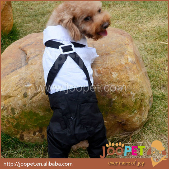 White Dog Suit - Goldenacresdogs.com