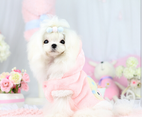 New fashion dogs cats hoodies clothes doggy warm soft jackets costume puppy cute cartoon sweatershirts apparel pet dog suit 1pcs