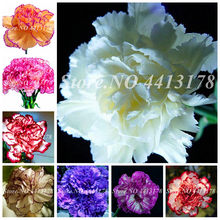 New Arrival! 50 Pcs Mini Carnations Bonsai Balcony Potted Plants Dianthus Caryophyllus Mother Flower For Home Garden Free Ship(China)