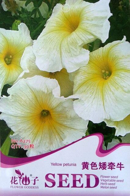 Flower seed yellow petunia seeds no trailing morning glory morning flower seed yellow petunia seeds no trailing morning glory morning glory yellow duck easy kind of mightylinksfo