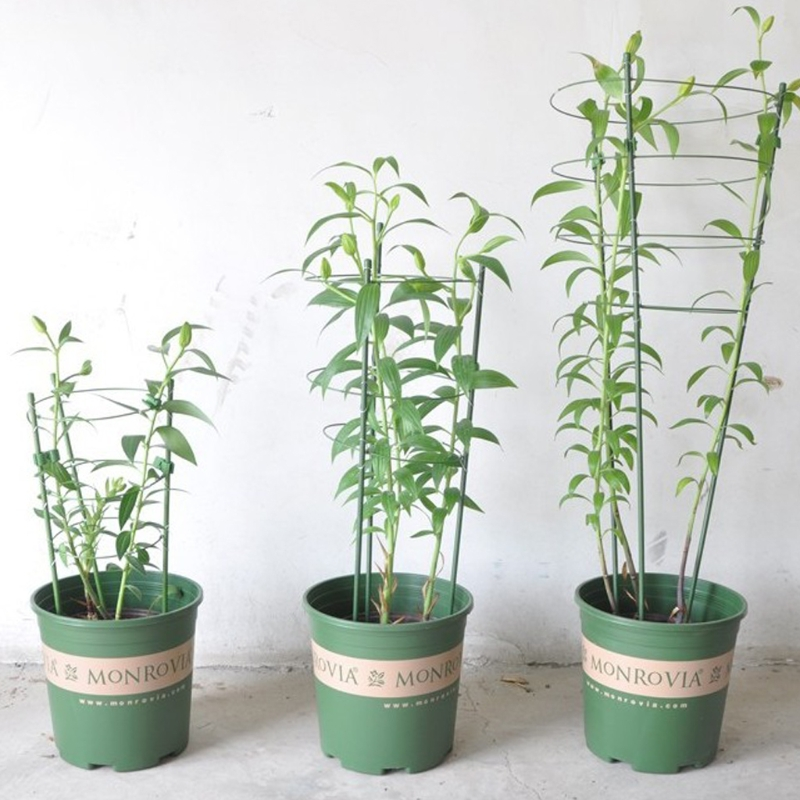 Garden Plant Support Climbing Plants 45cm 60cm Conical Trellis Supporter Frame W215