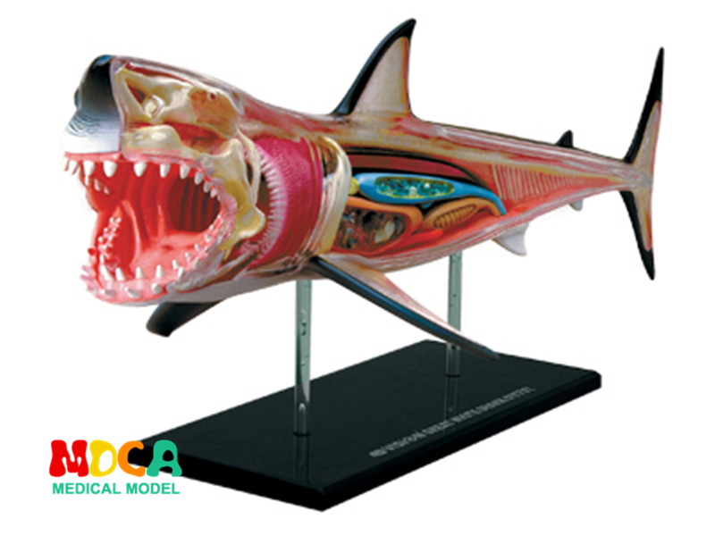 Shark 4d master puzzle Assembling toy Animal Biology organ anatomical model medical teaching model 4d master cat puzzle assembling toy animal biology organ anatomical model medical teaching skull skeleton model science toys
