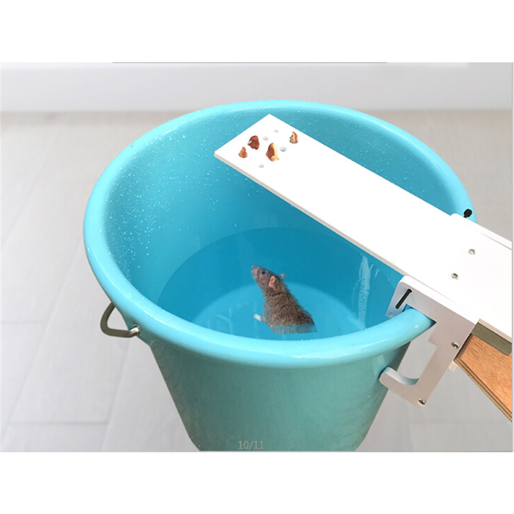 Aliexpress.com : Buy Seesaw Bait Catcher Auto Reset Catching Mouse ...