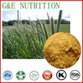 High Quality extract Natural Oat Straw Extract 10:1