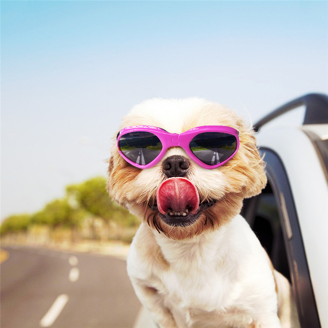 Foldable Sunglasses For Dogs 6