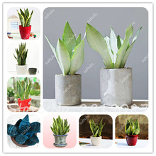 Indoor Plant Pots Promotion-Shop for Promotional Indoor Plant Pots ...