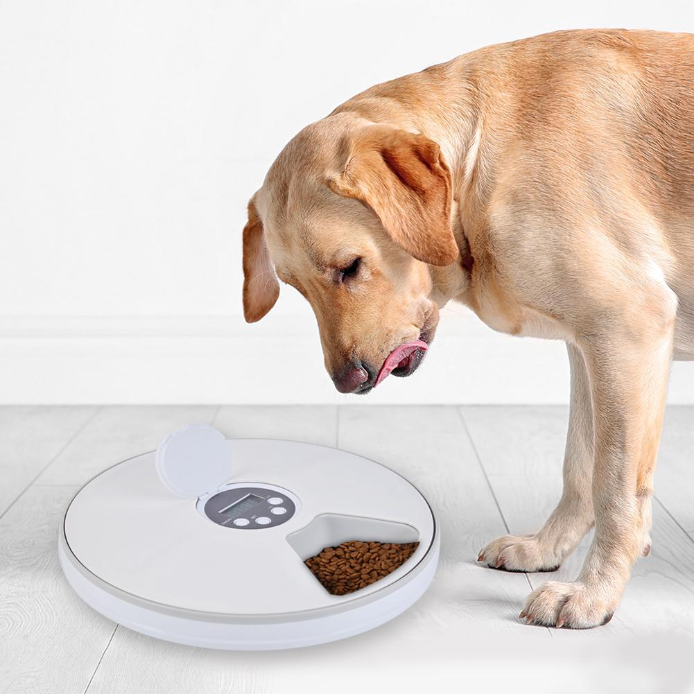Bol automatique pour animal de compagnie de Distribution 6 Grilles Compartiments Alimentaires Pour Chien Chat Lapin Et Petits Animaux Aliments Secs Et Humides Plaque - 4