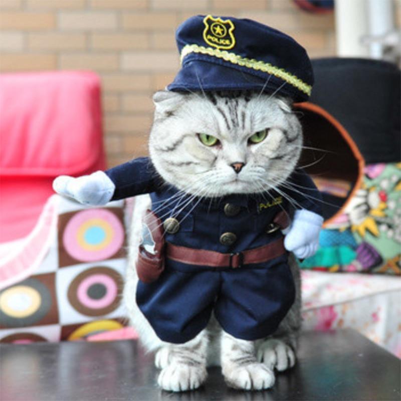 Costume vêtement chat
