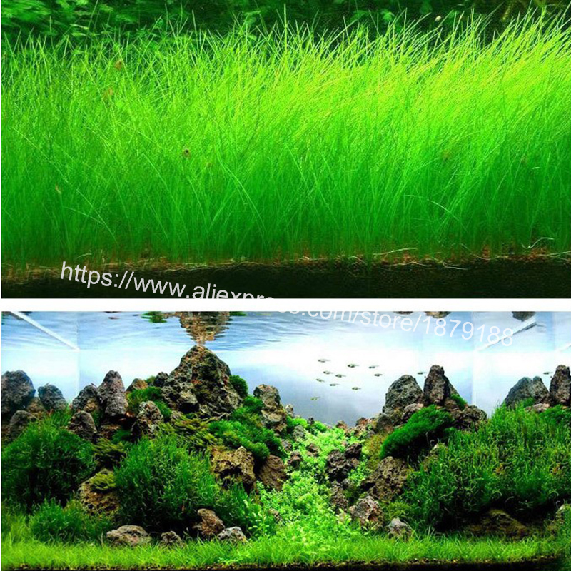 Aquarium Landscape Ornament aquatic Water Grass Mini Leaf ...