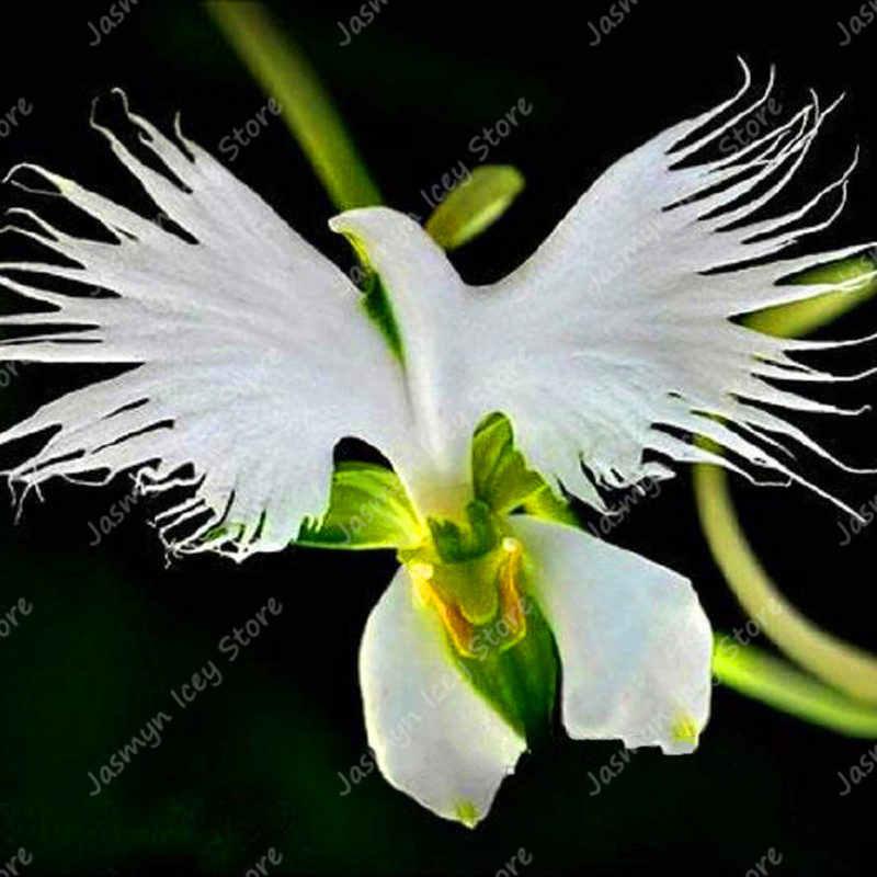 100 יח'\שקית נדיר קוף הפנים סחלב בונסאי צמחים 12 סוגים מוזר Alien סחלב פרח בעציץ שתילה עבור בית גן