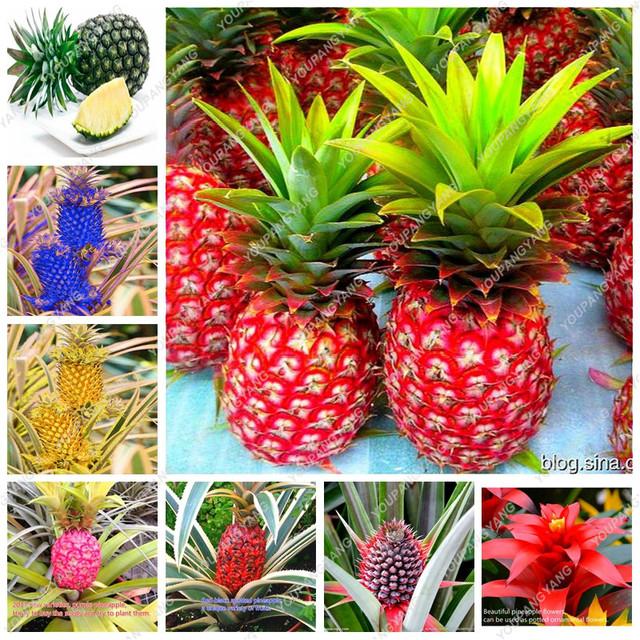 New Arrival Pineapple bonsai 100 Pcs/Bag Dwarf Pineapple Plantas Tree Fruit Rare Bonsais Plant bonsai For Home Garden Decoration