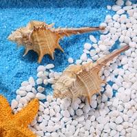 10cm Natural Conch Sea Shells Coral Aquarium Snails Senju Bonsai Craft Daisy Wedding Home Decoration Brown