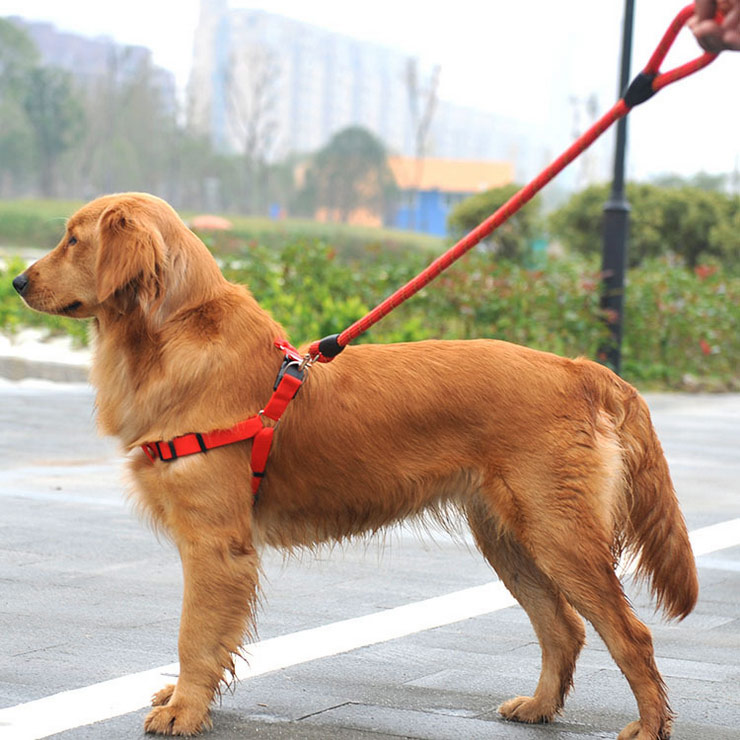 Large Dog Collar And Lead Set