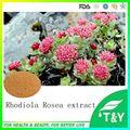 Pure 3% Natural Extrato de Rhodiola Rosea Salidroside 100 g/lote