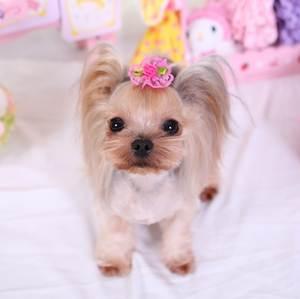 Best Pink Rose Lace Pet Dog Brands