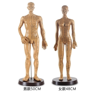 traditional Chinese medicine Acupuncture human model 48 cm 50cm Men's and women's model Acupuncture point model