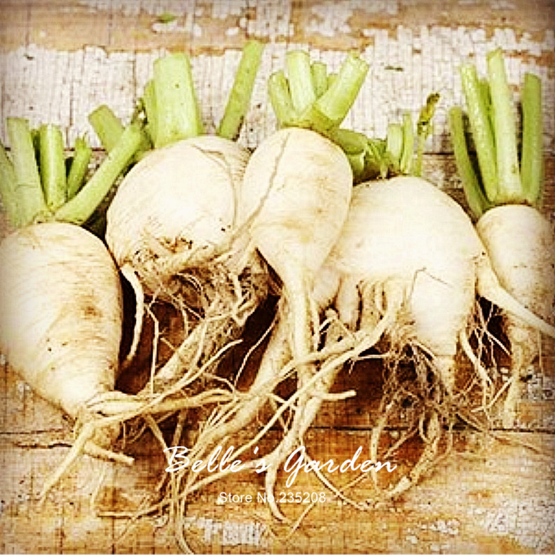 100pcs Hot Selling Popular Radish Seeds Munchener Bier Imported Oganic Home Garden Bonsai Fruit Vegetable Seeds