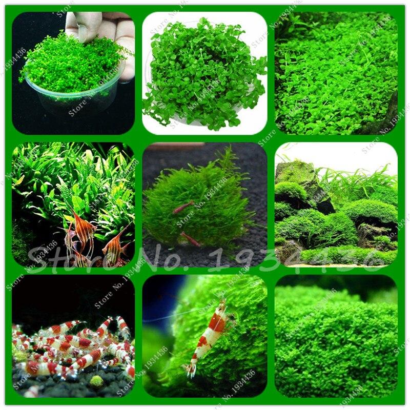 New 800pcs bag mini dwarf pearl plants aquarium grass seed for Ornamental fish tank