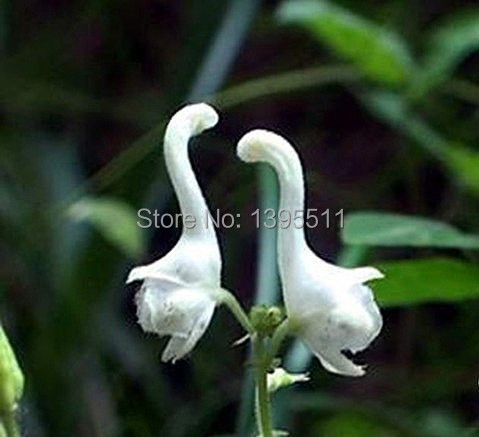200bag swan flowers seeds chinese characteristics rare flower white 200bag swan flowers seeds chinese characteristics rare flower seeds white mightylinksfo