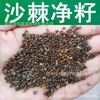 GERM Suanci tree seeds seed Liu retinoic acid TFH barbed fence barbed anti- sandstorm real shot 200g / Pack