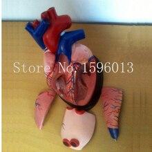 Anatomia Modelo de Coração 5 peças médica, Modelo de Coração médio, 3 vezes o tamanho natural modelo de coração