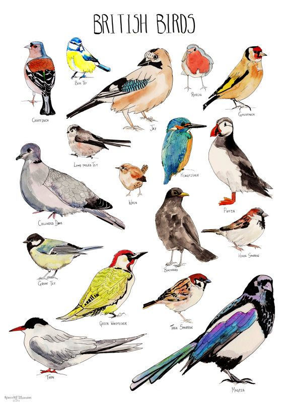 Common Backyard Bird Species Child Education Vintage Retro Poster Canvas  Painting DIY Wall Paper Posters Home Gift Decoration-in Wall Stickers from  Home ... - Common Backyard Bird Species Child Education Vintage Retro Poster