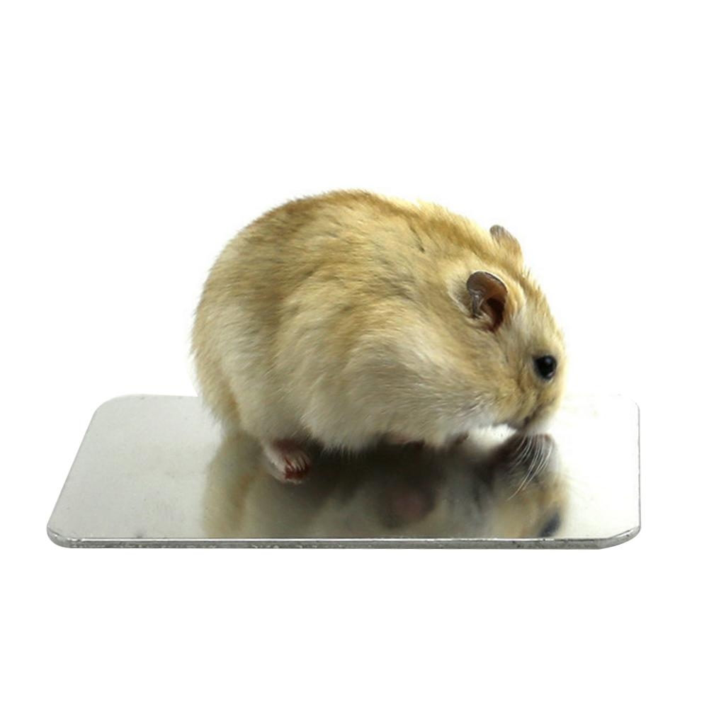 hamster traumdeutung