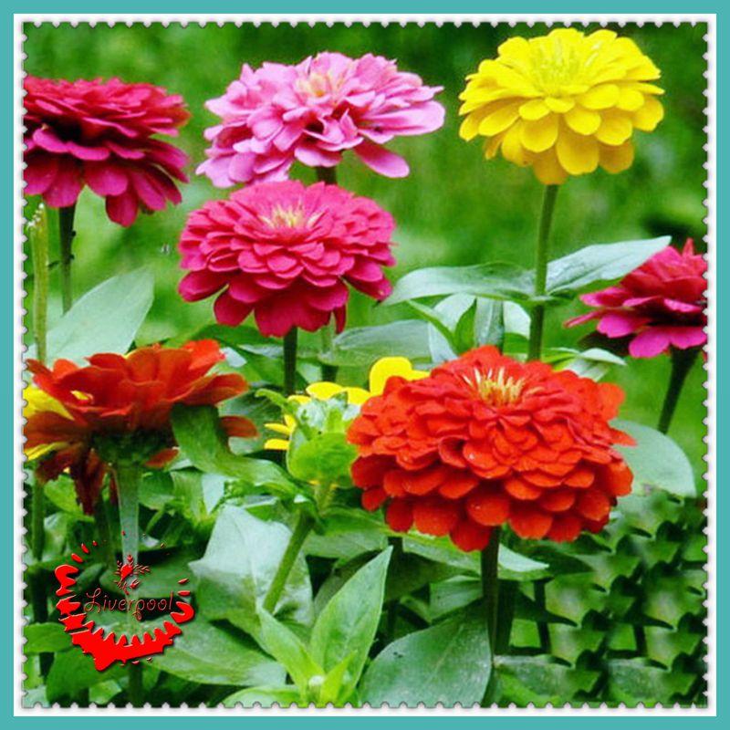 Unduh 440+ Gambar Gambar Bunga Yg Bagus HD Terbaik