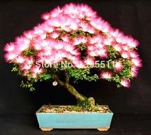 10 pieces bonsai  Albizia Flower  seeds called Mimosa  Silk Tree