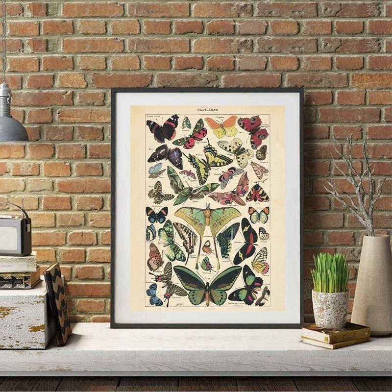 Antique Butterfly Prints Home Decor