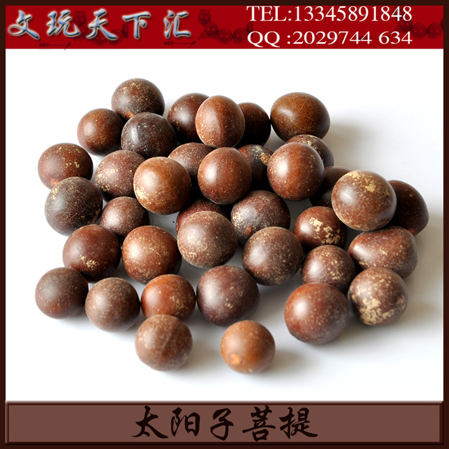 Sun Pu Tizi original seed wholesale by pounds sun seed sub Pu Tizi ...