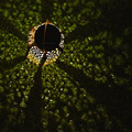 Солнечный фонарь полый резной подвесной яркий фонарь с ручкой для домашнего декора QJ888