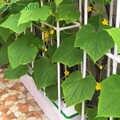 Plante horticole fixe vigne étagère anneau support clôture Pot de fleur spécial support de fleur culture sans sol support de plantation