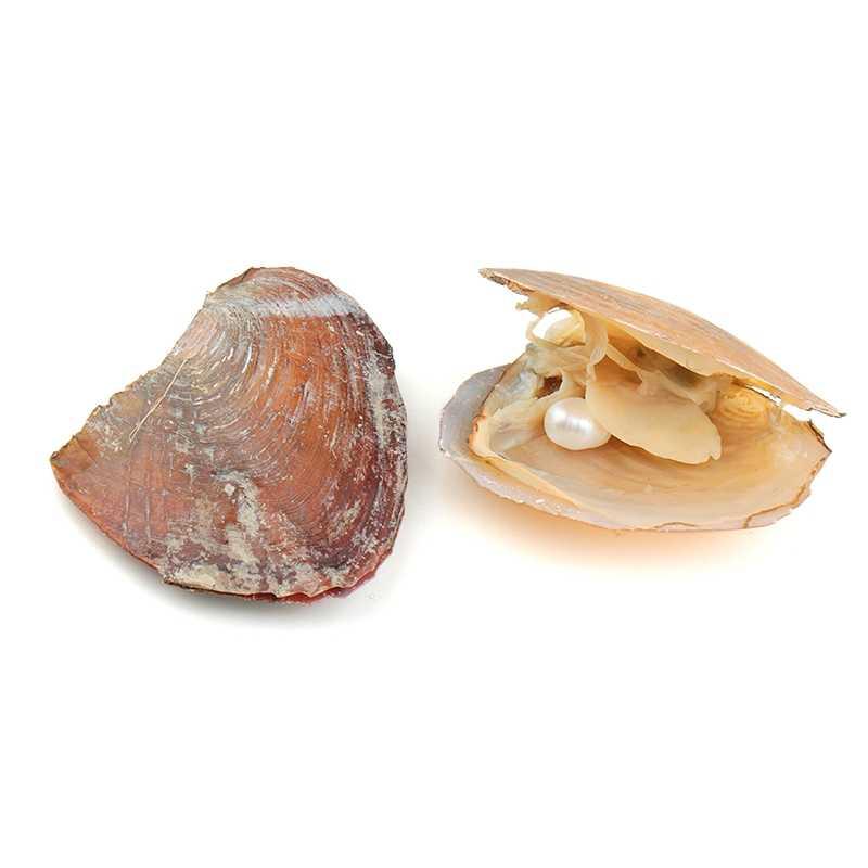 1 Stuks Vacuüm Verpakt 8-9 Mm Ovale Akoya Parels In Oyster Wit Roze Lavendel Zoetwater Parels Voor sieraden Maken Verrassing
