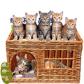 Rattan liubian knitted double layer pet nest cat pet supplies the dog teddy four seasons general