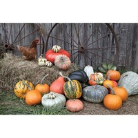 Photography studio Photography background Halloween backdrop props pumpkin lamp decoration portrait fotografia photophone HA 183