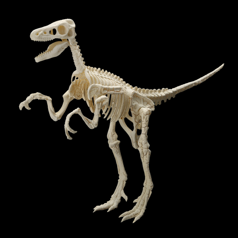 PVC Assorted Dinosaur Fossil Skeleton Figures Kids Toy Kid Child