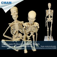 CMAM SKELETON12 Desktop 45cm Mini Human Recreational Skeleton Anatomical Model Medical Gift
