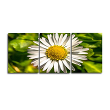 Laeacco 3 Panel White Flower Daisy Garden Posters and Prints Canvas Paintings Wall Artwork Pictures Home Living Room Decoration