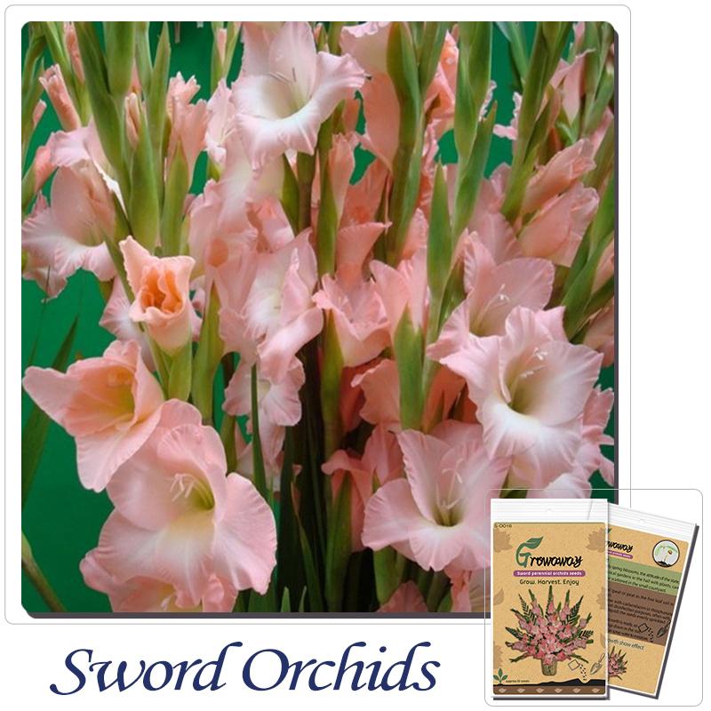 Einfach Orchideen-kaufen Billigeinfach Orchideen Partien Aus China ... Grune Zimmer Pflanzen Schoner Indoor Garten