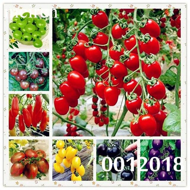 Томат бонсай шт. греческий 100 Heirloom сладкий Садоводство Plantas растения не ГМО растительные рассады для дома сад bonsais planta
