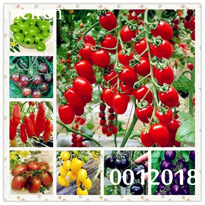 Vegetable Bonsai BUMBLE BEE TOMATO LOW ACID 50 PCS Seeds Mini Garden NEW 2018 G