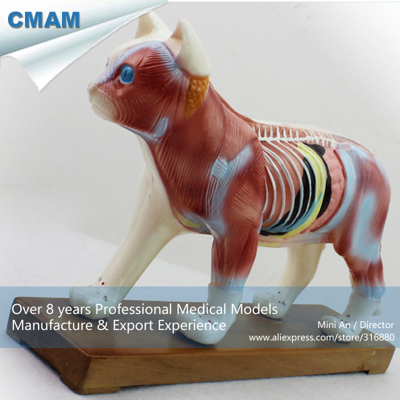 CMAM-A04 Veterinarian's Cat Feline Acupuncture Model,  Medical Science Educational Teaching Anatomical Models veterinarian s cat feline acupuncture model for sale medical anatomy meridian surgery model skeleton shadow esqueleto anatomia