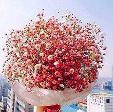 500 Цветок Гипсофила Метельчатая Семена Цветов Высокая Всхожесть Герани Сад Цветы Многолетние Растения Бонсай Травы Семена