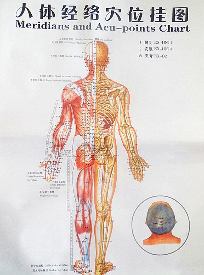 Großartig Körper Charts Galerie - Anatomie Ideen - finotti.info