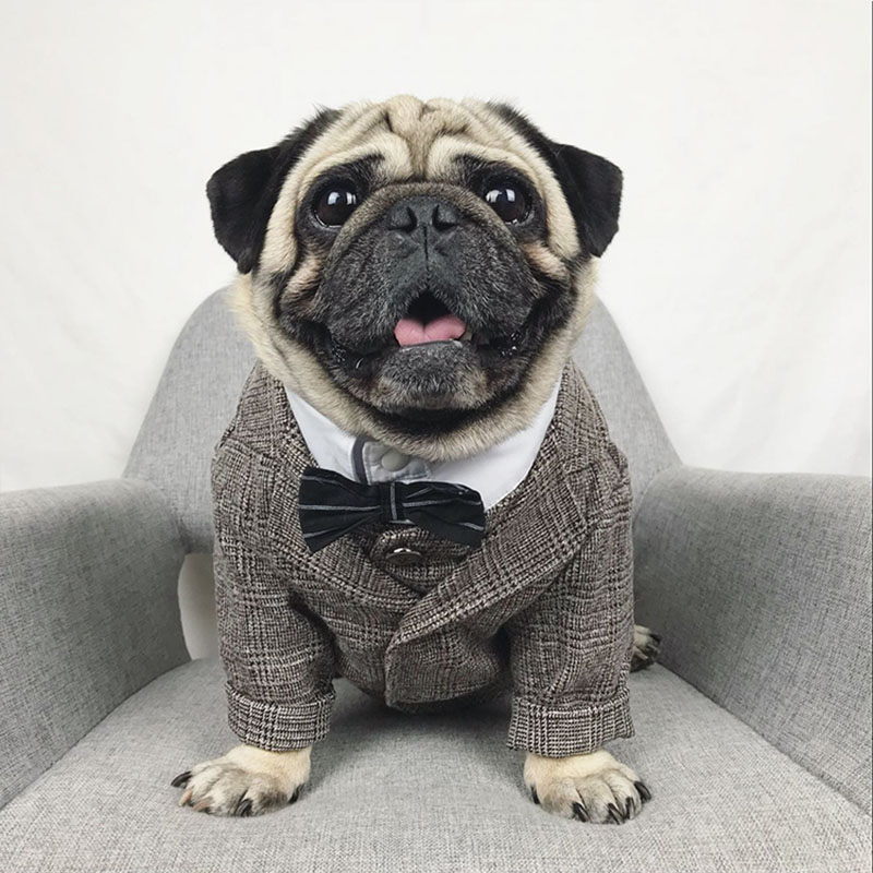 Formal Canine Garments Wedding ceremony Pet Canine Go well with Pets Canine Clothes For Canine Pets Provides XS-XXL Pet Attire Pet Outfit Pug Bulldog HTB1Lid3ChSYBuNjSspjq6x73VXax